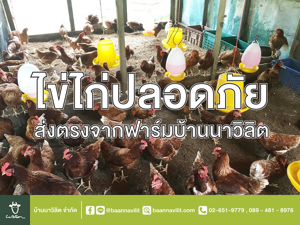 ไข่ไก่ปลอดภัย ไข่ไก่สดๆจากฟาร์มบ้านนาวิลิต ท่ายาง เพชรบุรี
