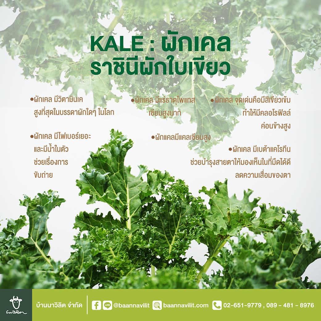 ผักเคล kale ราชินีผักใบเขียว